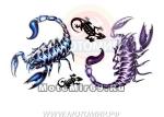 Татуировка временная (набор) 337 (легко наносится (30 секунд), Цветные скорпионы)
